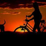 De musthave voor bij het uitlaten van je hond